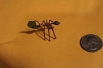 Copper Leaf Cutter Ant carrying leaf