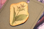 Hand Painted  Orchid  Nature Pin Signed