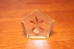 Lucite Preserved Orchid Paperweight  set of 2