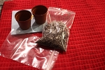 African Violet Standard leaf starting kit (two pots)