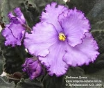 African Violet   Beloved Daughter 2 leaves