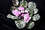 African Violet Optimara Loyalty pair of variegated  leaves