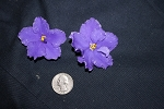 African Violet Russian DN Illumination, DN Oxarenie 2 leaves