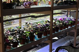 10 asst African Violet  leaf pots our choice