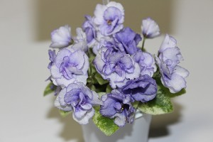 African Violet Rob's Chilly Willy  variegated miniature 2 leaves
