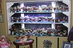 African Violet Noids  15 different Miniature and Semi leaves plus pots
